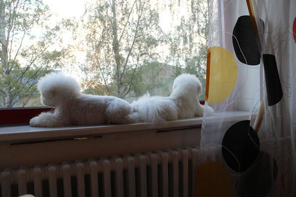 """Koirien oma """"telkkari"""""""