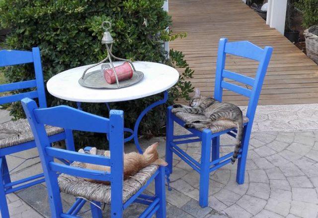 Rodoksen kissat siestailee